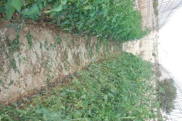 tomateras-de-invierno