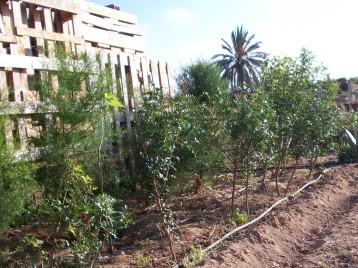 verduras-ecologicas-de-otono-100_3452