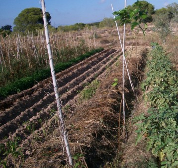 verduras-ecologicas-de-otono-100_3453