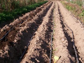 verduras-ecologicas-de-otono-100_3454