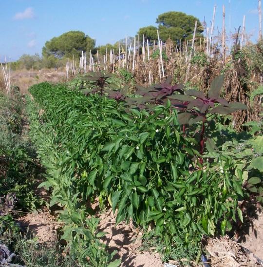 verduras-ecologicas-de-otono-100_3458