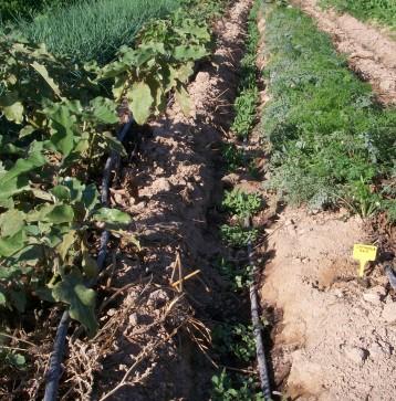 verduras-ecologicas-de-otono-100_3462