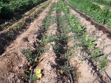 verduras-ecologicas-de-otono-100_3468