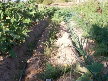 verduras-ecologicas-de-otono-100_3472