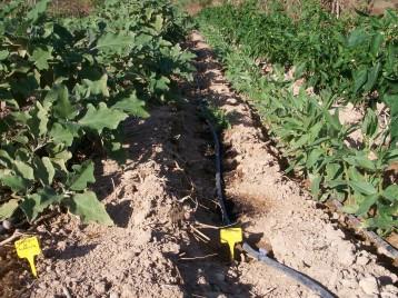 verduras-ecologicas-de-otono-100_3477