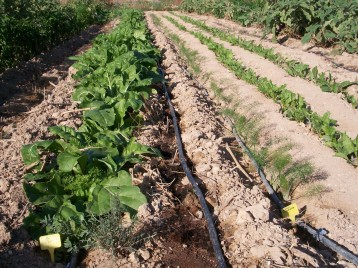 verduras-ecologicas-de-otono-100_3479