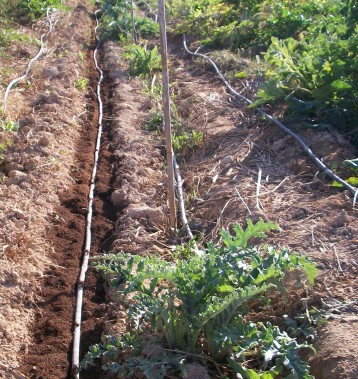verduras-ecologicas-de-otono-100_3486