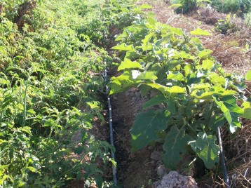 verduras-ecologicas-de-otono-100_3488