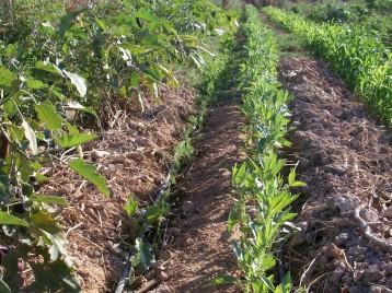 verduras-ecologicas-de-otono-100_3495