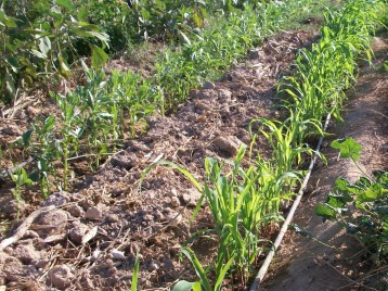 verduras-ecologicas-de-otono-100_3496