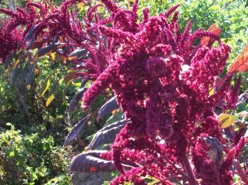 verduras-ecologicas-de-otono-bacarot-granja-masphael-100_3646