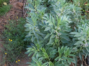 verduras-ecologicas-de-otono-bacarot-alicante-100_3768