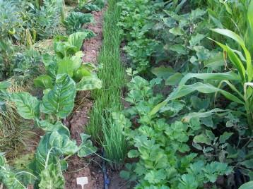 verduras-ecologicas-de-otono-bacarot-alicante-100_3775