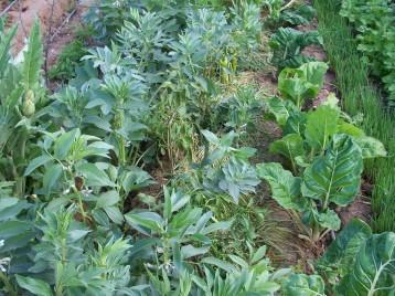 verduras-ecologicas-de-otono-bacarot-alicante-100_3776