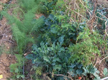 verduras-ecologicas-de-otono-bacarot-alicante-100_3809