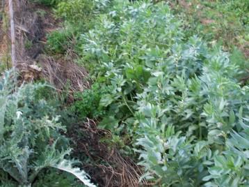 verduras-ecologicas-de-otono-bacarot-alicante-100_3815