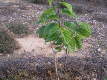verduras-ecologicas-de-otono-bacarot-alicante-100_3827
