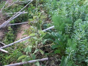 verduras-ecologicas-de-otono-bacarot-alicante-100_3833