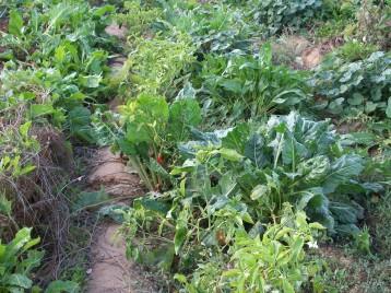 verduras-ecologicas-de-otono-bacarot-alicante-100_3837