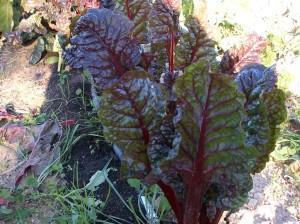 verduras-ecologicas-invierno-bacarot-alicante-100_3918