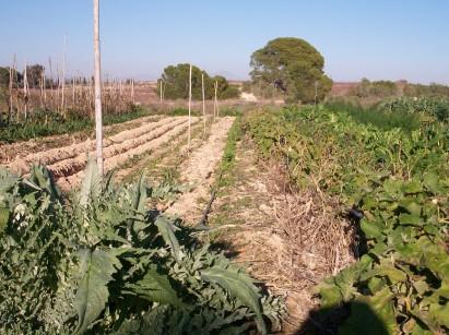 verduras-ecologicas-invierno-bacarot-alicante-100_3922