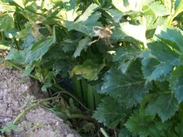 verduras-ecologicas-invierno-alicante-100_4109
