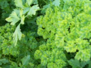 verduras-ecologicas-invierno-alicante-100_4111