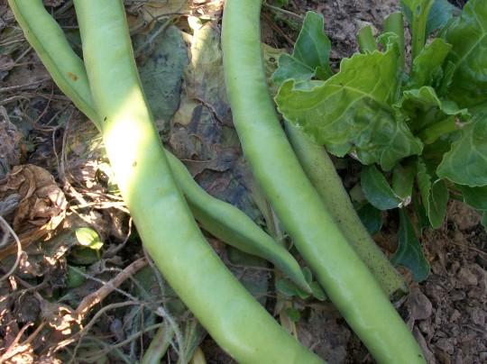 verduras-ecologicas-invierno-alicante-100_4114