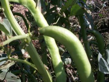 verduras-ecologicas-invierno-alicante-100_4115