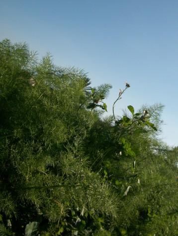 verduras-ecologicas-invierno-alicante-100_4132