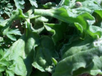 verduras-ecologicas-invierno-alicante-100_4133