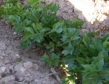 verduras-ecologicas-invierno-alicante-100_4140