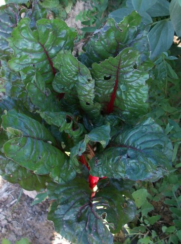 verduras-ecologicas-invierno-alicante-100_4144