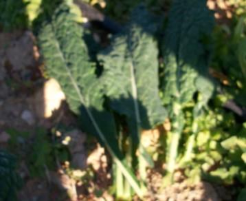 verduras-ecologicas-invierno-alicante-100_4148