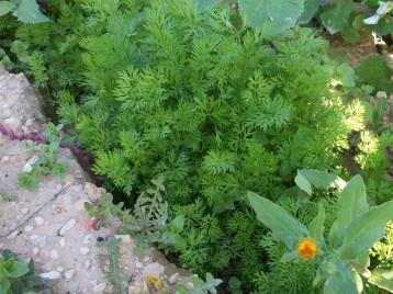 verduras-ecologicas-invierno-alicante-100_4158