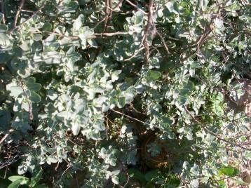 verduras-ecologicas-invierno-alicante-100_4159