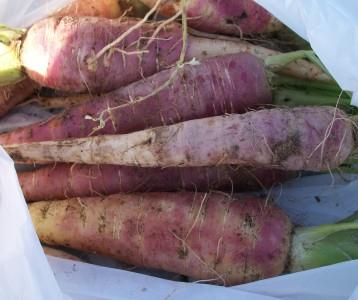 verduras-ecologicas-invierno-alicante-100_4163
