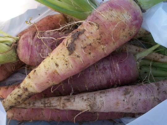 verduras-ecologicas-invierno-alicante-100_4164